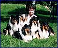 Sveta and Tete-a-Tete Collies - 1996