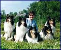 Sveta and Tete-a-Tete Collies - 2000